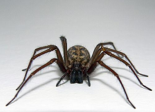 spider-main_full